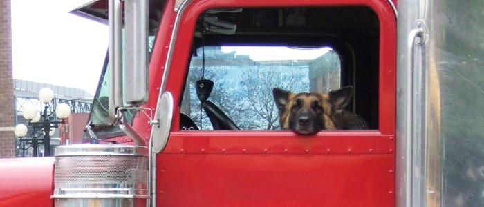 Driving Companion